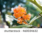 Oranges Orchid Beautiful In...
