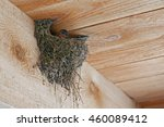 Barn Swallow On Nest Under A...