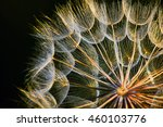 Abstract Dandelion Flower.gold...