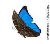 Beautiful Flying Blue Butterfl...