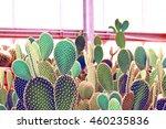 Cactus In Desert  Cactus Garden.