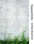 Concrete Wall With Ornamental...