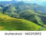 rice fields on terraced in... | Shutterstock . vector #460293892