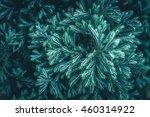 leaf pine background | Shutterstock . vector #460314922