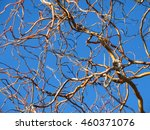 Chaotic Babel Of Bare Twigs Of...