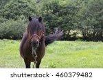 pony | Shutterstock . vector #460379482