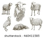 hand drawn sketch sheep of on a ... | Shutterstock . vector #460411585