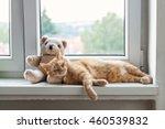 Ginger Tomcat Sleeping In The...