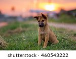 baby dog with sunset | Shutterstock . vector #460543222