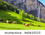 Summer Landscape With Cow...