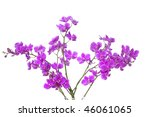 pink orchid branch | Shutterstock . vector #46061065