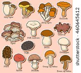 Set Of Edible Mushrooms  Color...