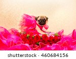 pug puppy and  flowers | Shutterstock . vector #460684156