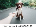 puppy border collie gives paw | Shutterstock . vector #460805158