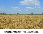 golden wheat field    Shutterstock . vector #460826086