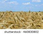golden wheat field    Shutterstock . vector #460830802