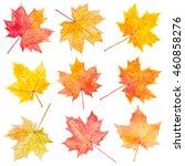 Set Of Autumn Maple Leaves....