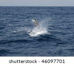 Sailfish Saltwater Sport...