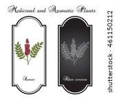 sicilian sumac  rhus glabra ... | Shutterstock .eps vector #461150212