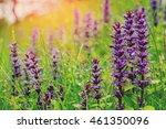 blue flowers  clary sage ... | Shutterstock . vector #461350096