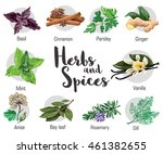 herbs  condiment and spices... | Shutterstock .eps vector #461382655