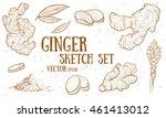 hand drawn ginger root set.... | Shutterstock .eps vector #461413012