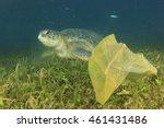 environmental problem  plastic... | Shutterstock . vector #461431486