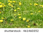 Spring Landscape Yellow...