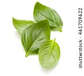 sweet basil herb leaves handful ... | Shutterstock . vector #461709622