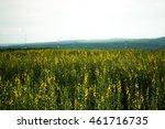 beautiful crotalaria flower ... | Shutterstock . vector #461716735