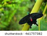 Mystic Butterfly. Beautiful...