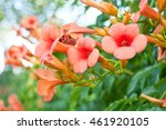 Beautiful Red Flowers Of The...