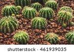 cactus nature green background... | Shutterstock . vector #461939035