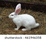 Stock photo white rabbit 461946358