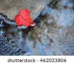 a solitary bright red autumn... | Shutterstock . vector #462023806