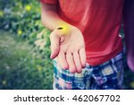 firefly on a child's hand | Shutterstock . vector #462067702