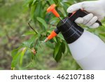 Spraying of peach fruit tree which sick leaf curl (Taphrina deformans) by fungicides - stock photo