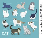 Adorable Cat Breeds Collection...