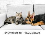Stock photo cute cat and funny dog on couch 462238606