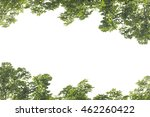 green leaves frame isolated on... | Shutterstock . vector #462260422
