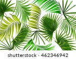 green leaves of palm tree on... | Shutterstock . vector #462346942