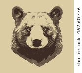 bear etched portrait hand drawn ... | Shutterstock .eps vector #462509776