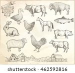 farm collection. hand drawn... | Shutterstock .eps vector #462592816