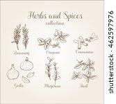hand drawn spicies vintage set | Shutterstock .eps vector #462597976
