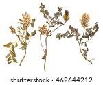set of wild dry pressed flowers ... | Shutterstock . vector #462644212