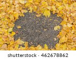 Colorful Autumn Ginkgo Leaves...