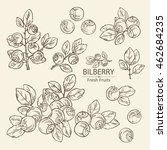 collection of bilberry . hand...   Shutterstock .eps vector #462684235
