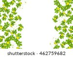 Green Leaves With Yellow Flowe...