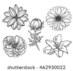 set of vector flowers isolated... | Shutterstock .eps vector #462930022