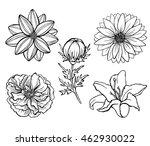 set of vector flowers isolated...   Shutterstock .eps vector #462930022